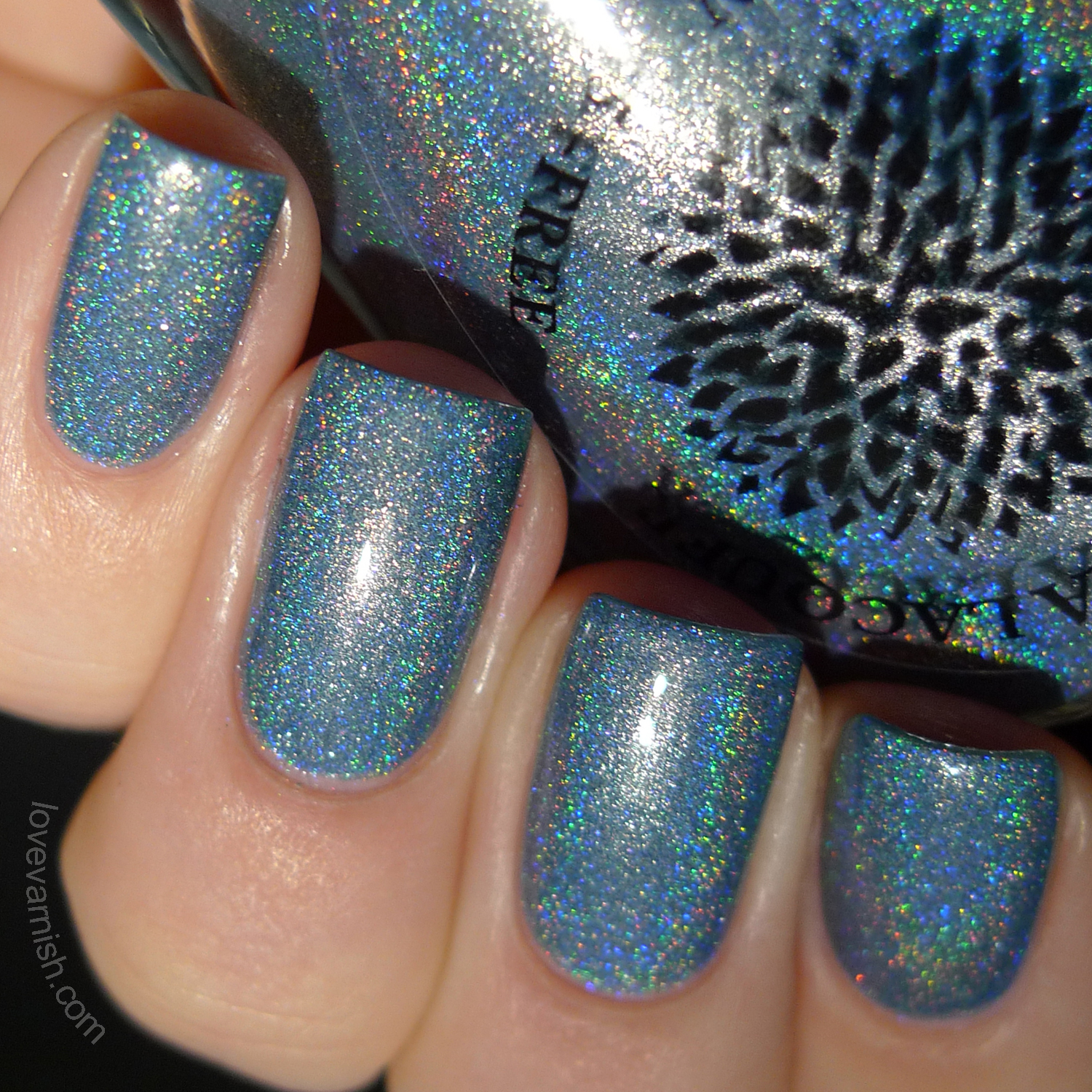 Black Dahlia Lacquer Silver Willow