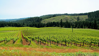 The Oregon Winery Review