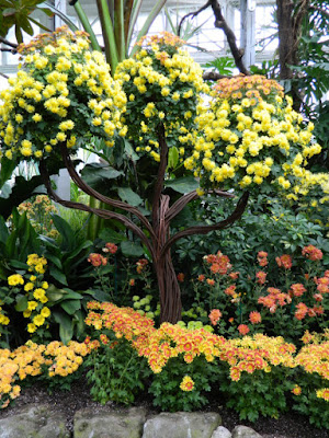 Chrysanthemum tree display at Allan Gardens Conservatory 2015 Chrysanthemum Show by garden muses-not another Toronto gardening blog