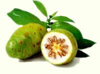buah herbal mengkudu