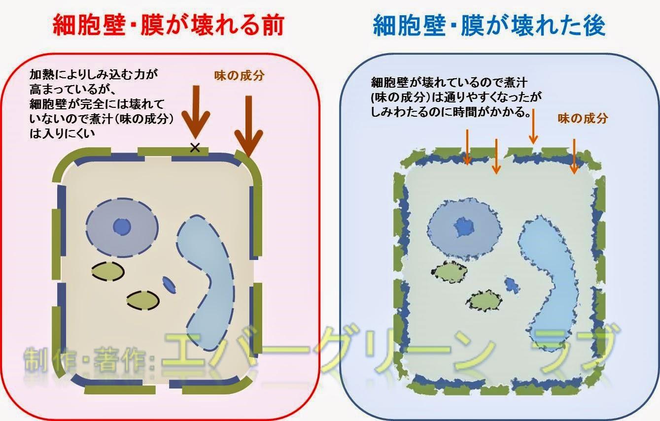 加熱 圧力鍋 どうぶつ しょくぶつ さいぼう ドウブツ ショクブツ サイボウ 加熱 圧力鍋 細胞壁 味 大根 煮物 冷ます 調理 調理方法 沁みる 拡散の力 短縮 拡散係数 中まで しみる 時間がかかる 味 壊れる 壊す 普通の鍋 早い どうして 沁みやすい しみ込むにもの ゴルジ体 ミトコンドリア 中心体 動物細胞 液胞 葉緑体 小胞体 細胞核 細胞膜 細胞壁 植物細胞 細胞壁 味 大根 煮物 冷ます 調理 調理方法 沁みる 拡散の力 短縮 拡散係数 中まで しみる 時間がかかる 味 壊れる 壊す 普通の鍋 早い どうして 沁みやすい しみ込むにもの さいぼうへき さいぼうまく ニモノトサイボウヘキ サウイボウマク