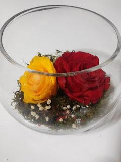 Rosas Naturales Preservadas Amarillas y Rojas ¡Duran 4 Años! Santa Ana, El Salvador