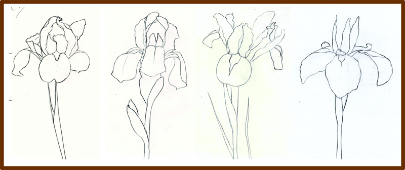 Line Drawing Iris Flower : Weekly doodles and tuts how to draw an iris flower