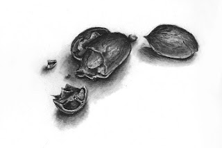 Charcoal drawing of nuts