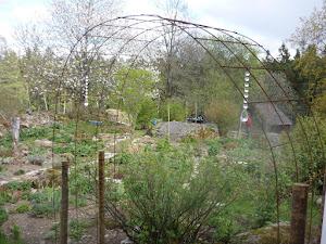 Bilder från min trädgård 2011