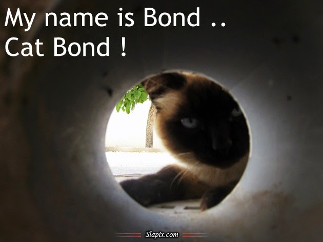 cute cat and funny cat my name is bond cat bond. Black Bedroom Furniture Sets. Home Design Ideas