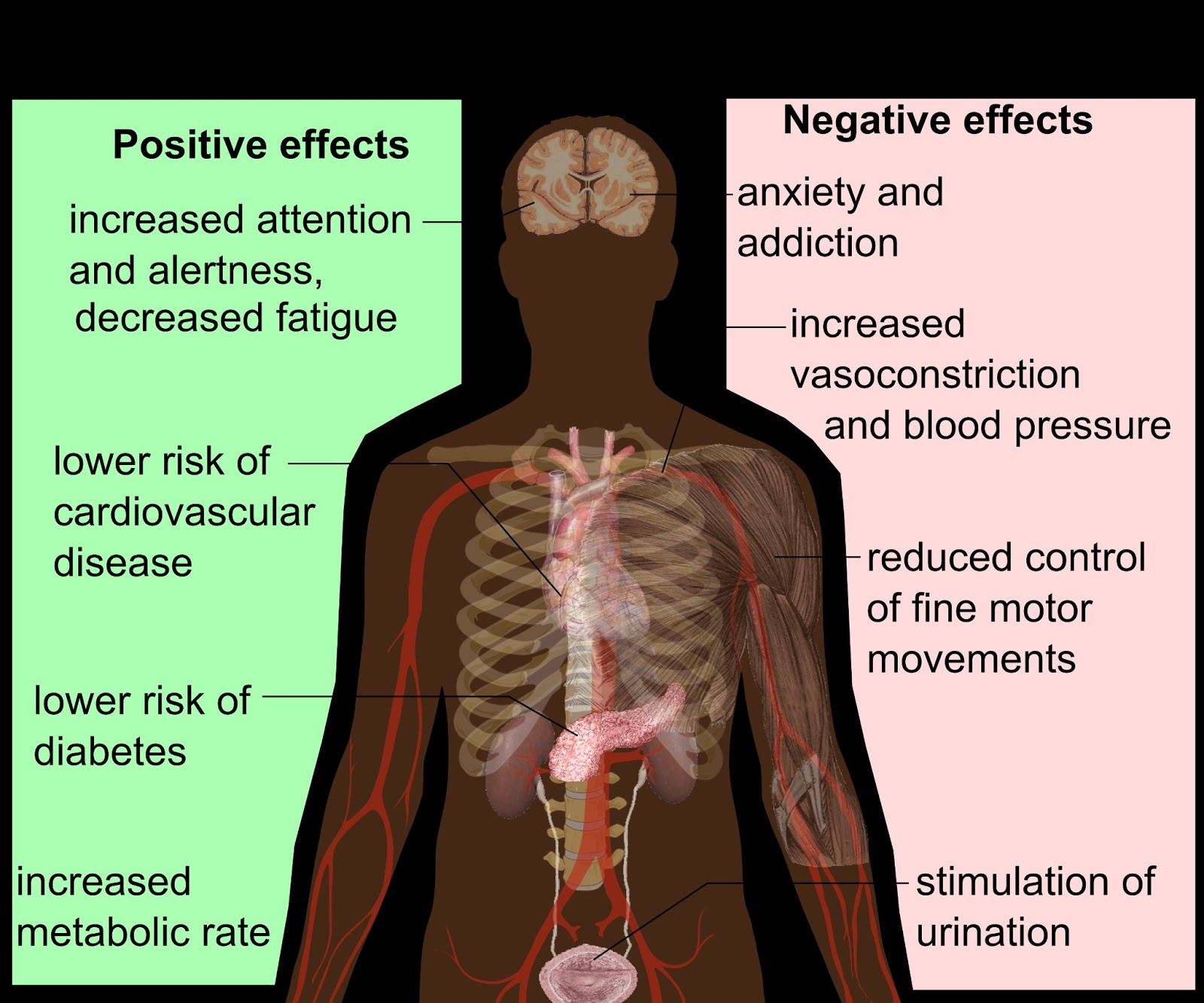 the effects of caffeine A sample informative speech on caffeine and its beneficial and negative effects using topics that interest you will help make your public speaking presentation flow.