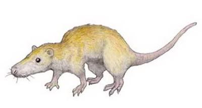 animales prehistoricos de Francia Sinoconodon