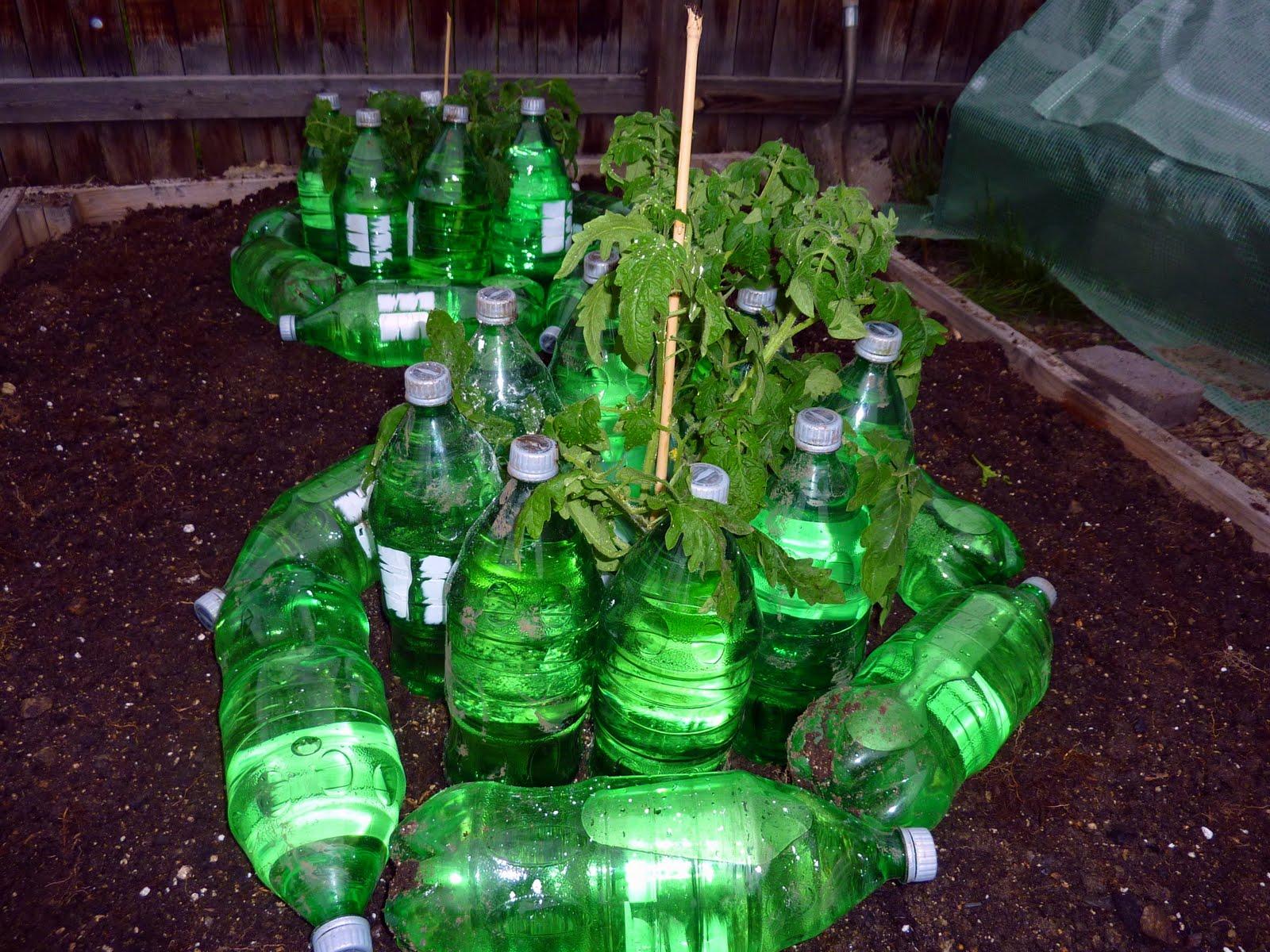 http://1.bp.blogspot.com/-rtU0Lq2DxNs/Ta0AxYWc3gI/AAAAAAAABnU/R7MTsM-uwGg/s1600/early+tomato+wall+of+water+soda+bottles.jpg