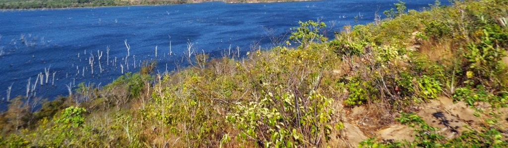 Desmatamento-Chorozinho-da-caatinga-Herpsilochmus-sellowi