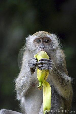 Writing Over The Threshold Mary Oliver Monday Monkey