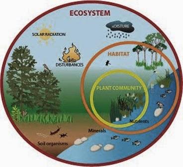Apa pengertian ekologi: Definisi ekologi
