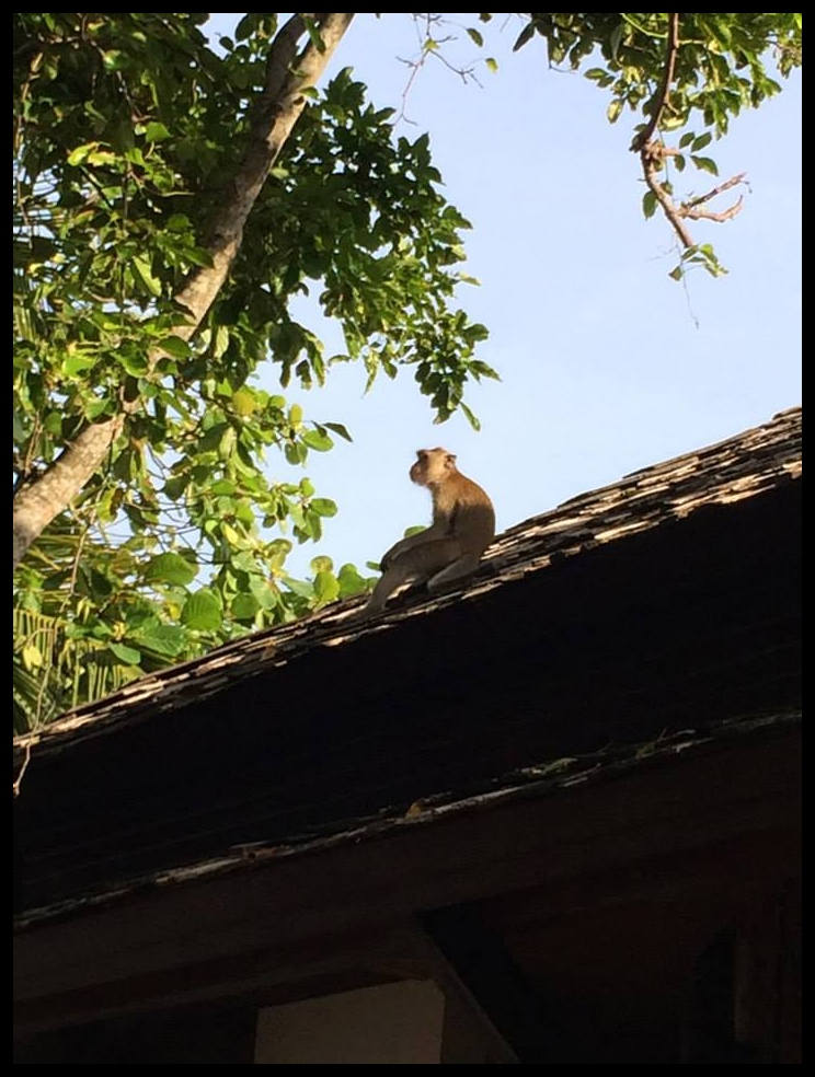 monkey on a roof in Railay, Thailand
