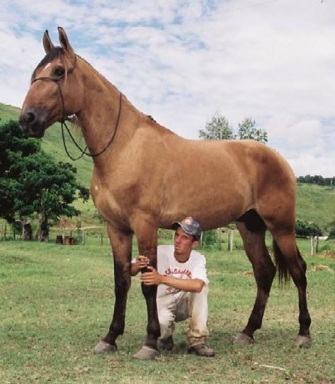 Animis e cia criouloo cavalo crioulo uma raa de cavalos o cavalo crioulo se originou dos animais de sangue andaluz e berbere introduzidos no continente americano fandeluxe Choice Image