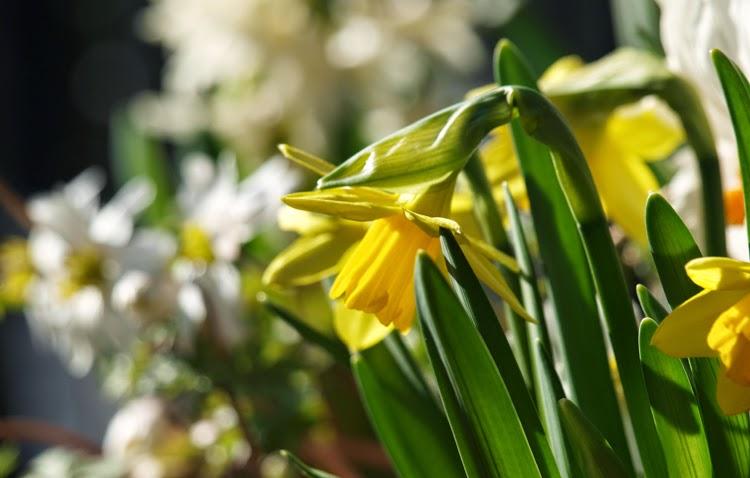 Forår i havens bede og krukker