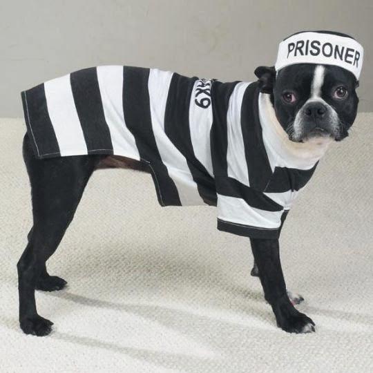 prisoner dog costume