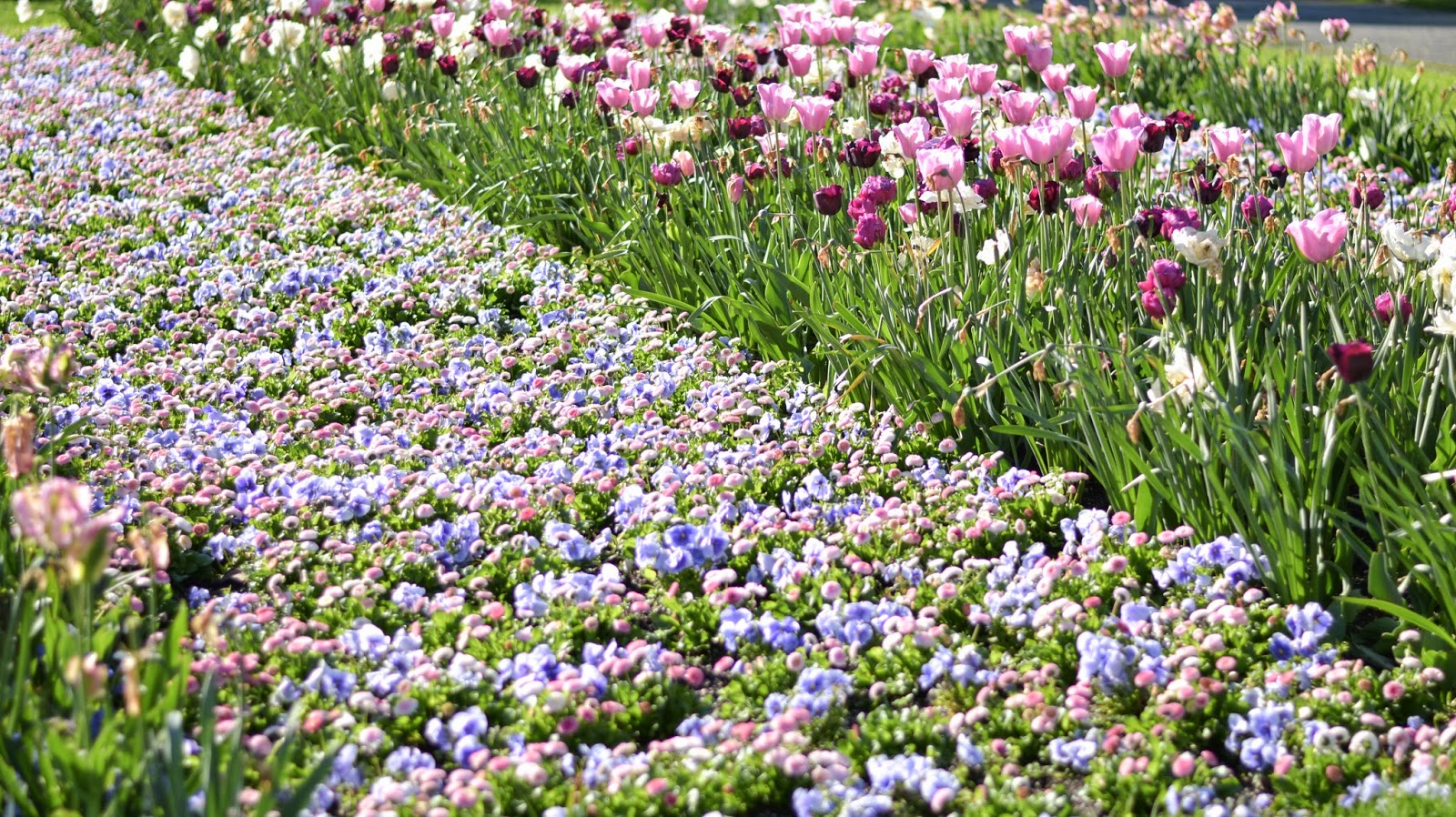 munich kings garden flowers blooming