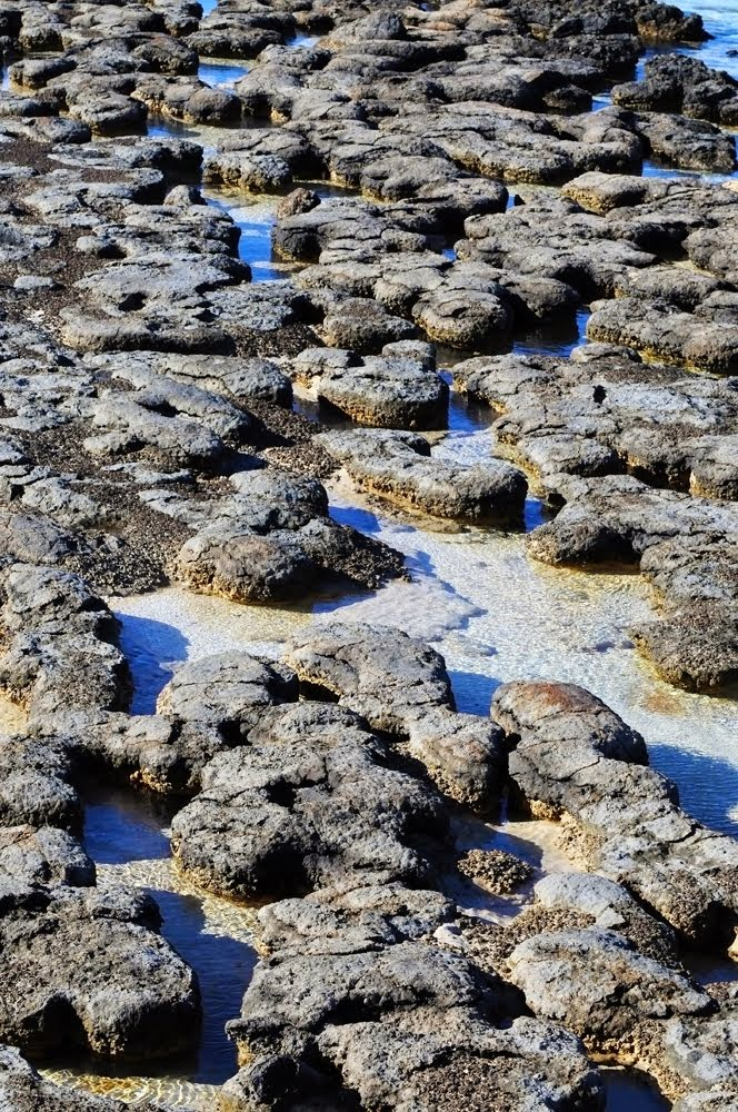 Hamelin Pool Stromatilites 252