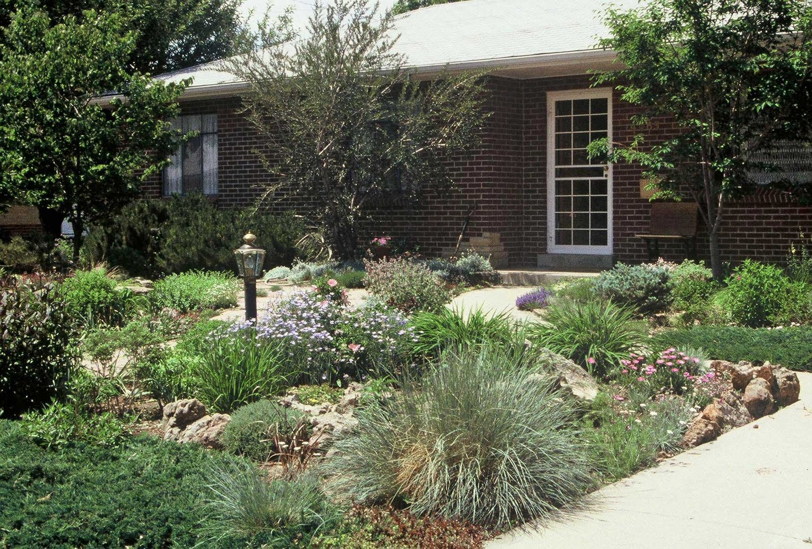 a shallow front yard is given more depth with added paths and sculptural plantings - Garden Ideas To Replace Grass