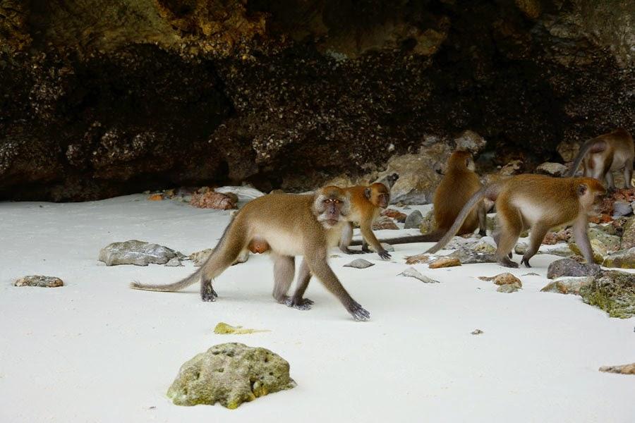 Monkey Beach na Koh Phi Phi