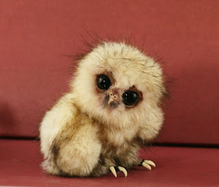 cute little odd owl