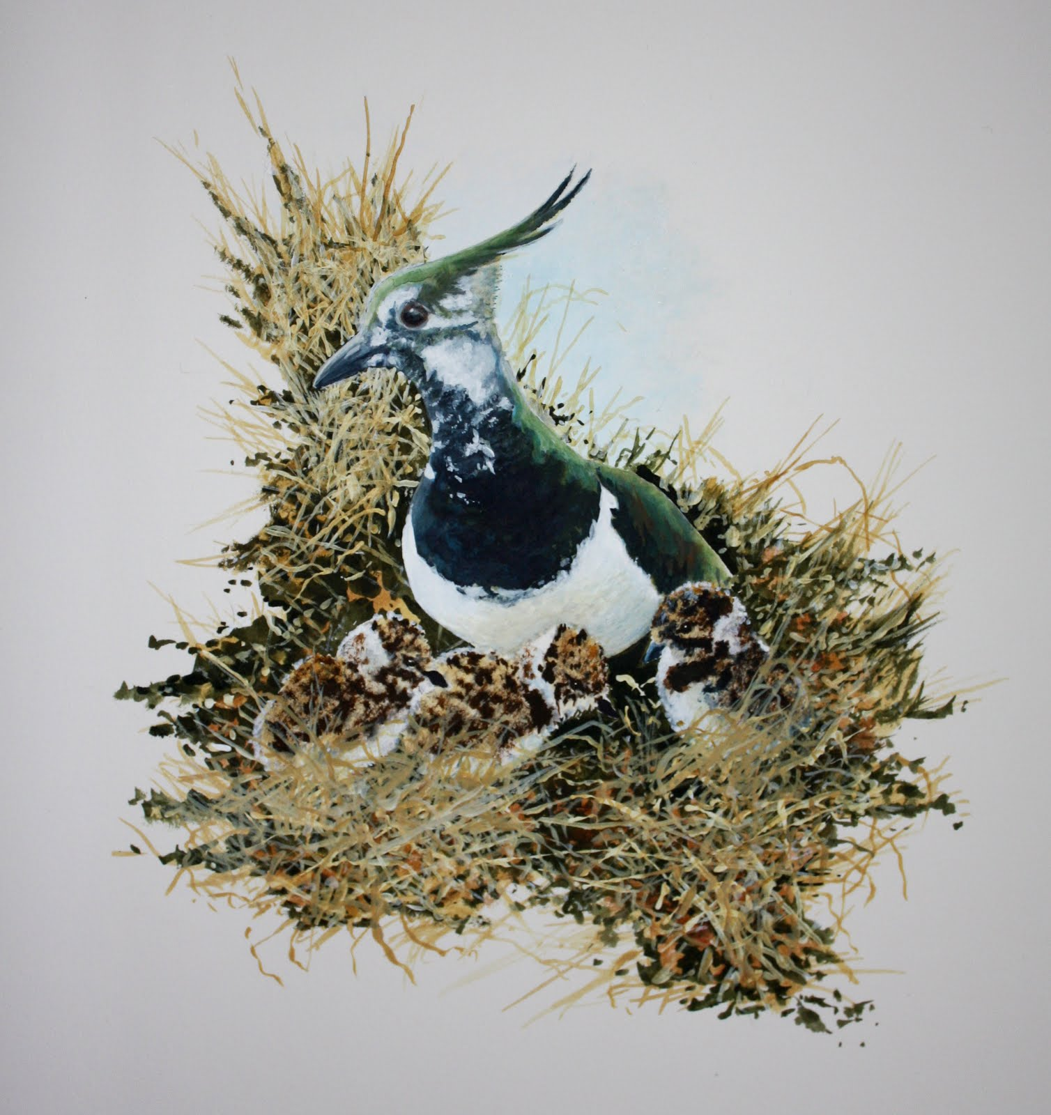 Lapwing and chicks