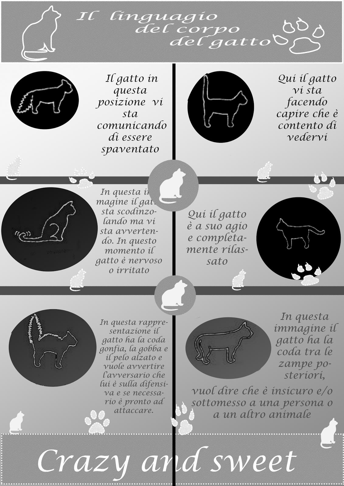 infografica-il-linguaggio-dei-gatti