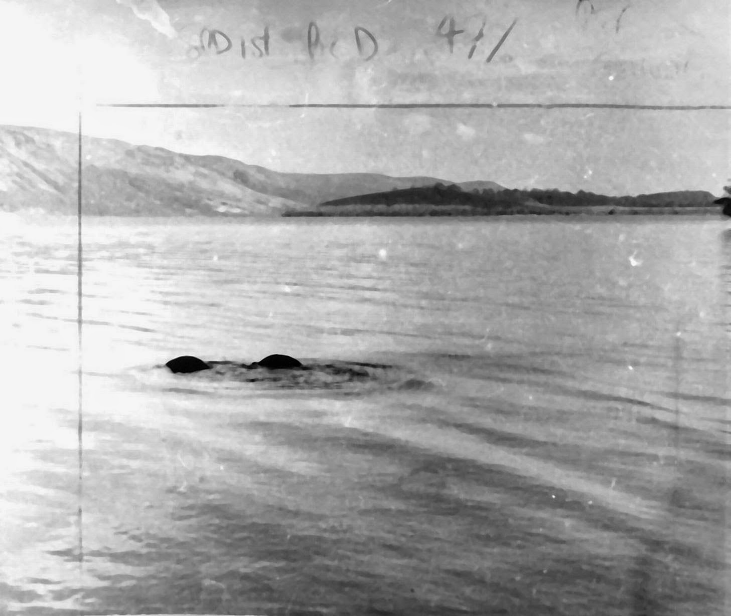 an overview of the mystery and the study of the unknown the loch ness monster The majority of well known cryptozoology is directed towards the search for cryptids such as bigfoot, the yeti, and the loch ness monster, which appear often in popular culture, but for which there is little or no scientific support.