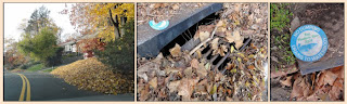 Leaf piles in street, clogging storm drain, leaching into river.