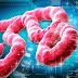 Clínica próxima de Boston entra em quarentena por paciente com suspeita de Ebola