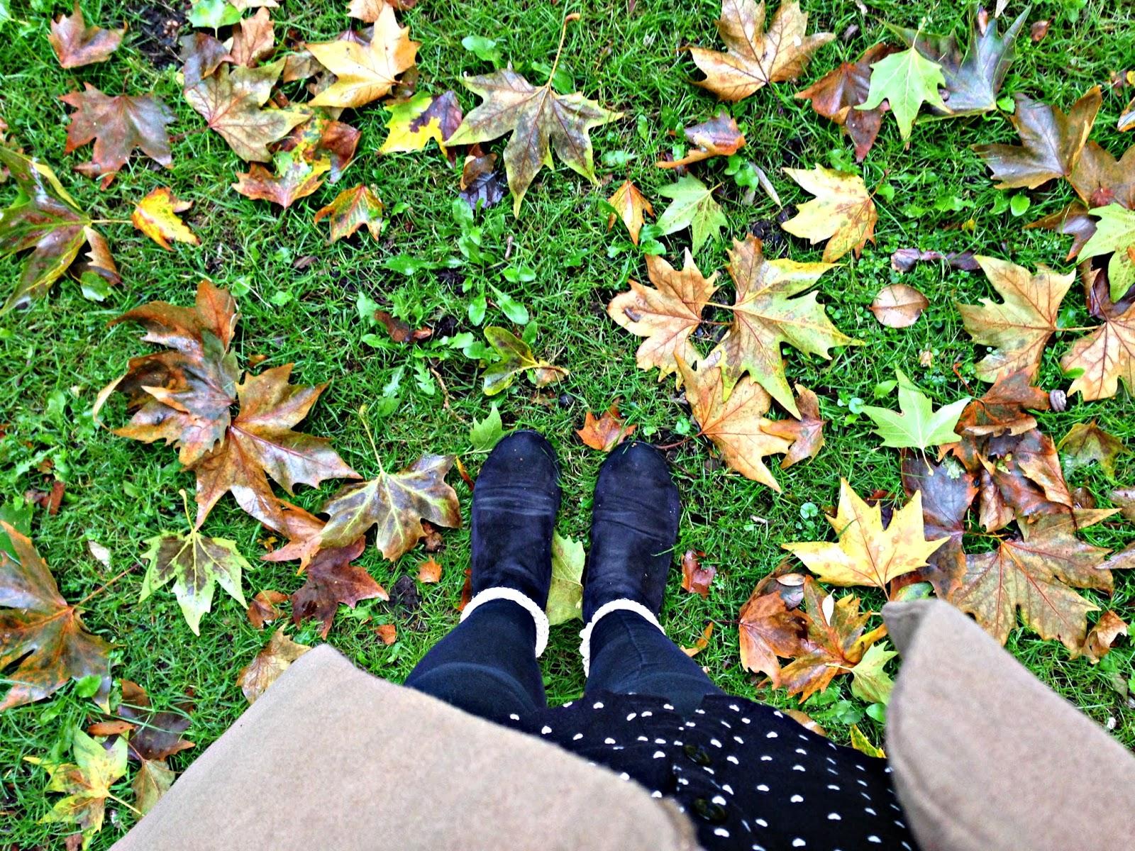Morning Autumn Walk