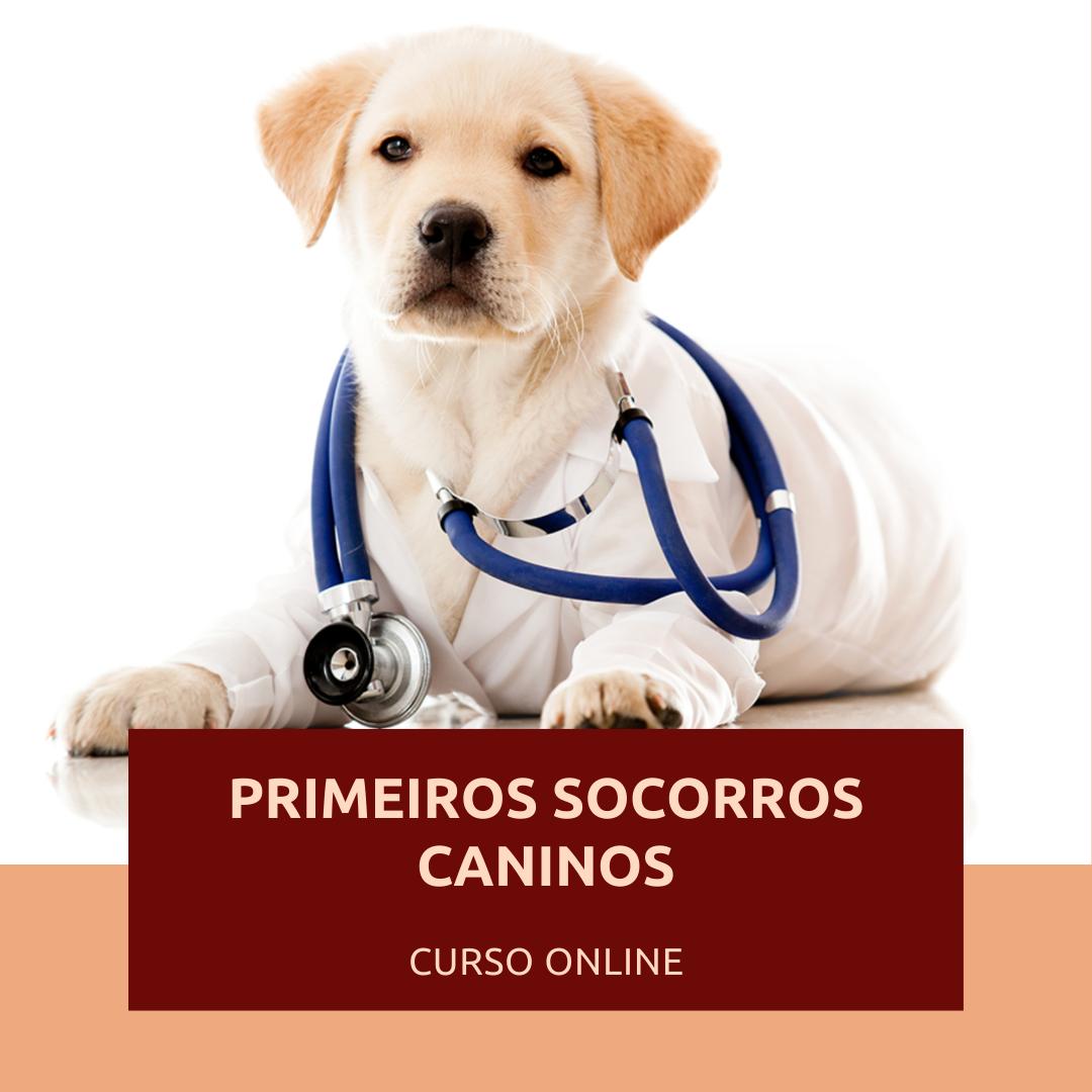 Curso de Primeiros Socorros Caninos (online)