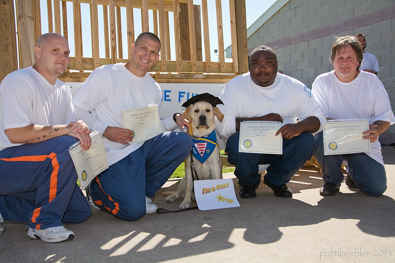 "Four men kneel on one knee on the cement, all are wearing the blue prison pants and white t-shirts. A young yellow lab is sitting between the second and third man, all are looking at the camera. The puppy is wearing a black graduation hat, the blue Future Leader Dog bandana, and a medal around his neck. The men are holding certificates up, and there is a sign that reads ""I'm a star"" in front of the lab. In the background is a wooden staircase on the left and a white brick building on the right."