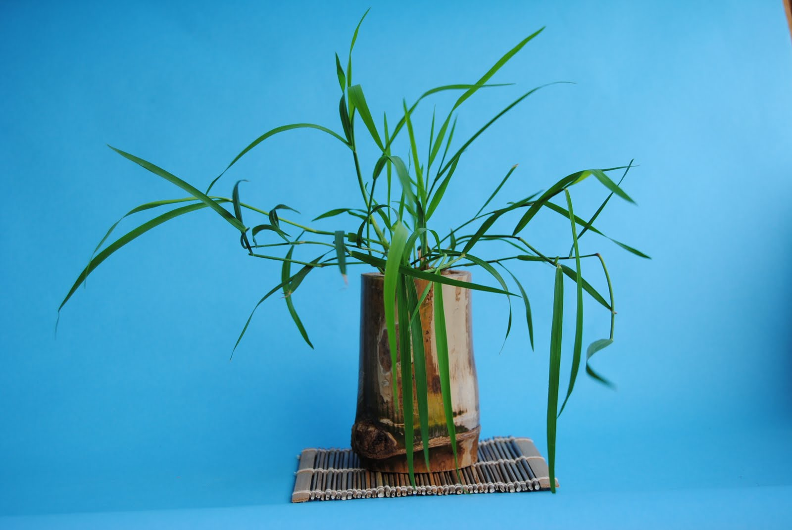 Ikebana el arte floral japon s take el bamb japon s - Reproduccion del bambu ...