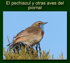 http://iberian-nature.blogspot.com.es/p/ruta-tematica-el-pechiazul-y-otras-aves.html