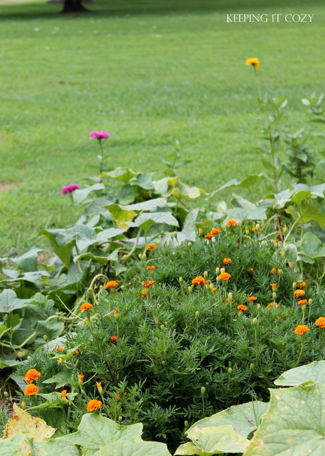 Keeping It Cozy: In The Garden on