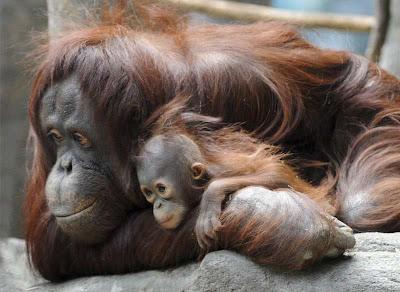 40 imágenes de animales hermosos: Taringa!