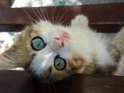 Foto gato dado vuelta