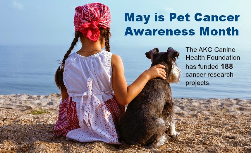 AKC Canine Health Foundation - Pet Cancer Awareness month 2014
