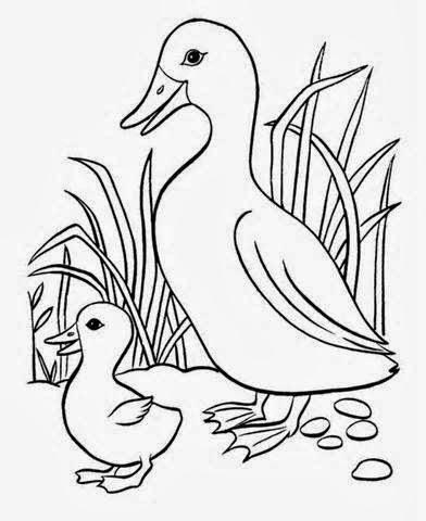 ... Free Download: Cute Duck Drawing Cartoon HD Wallpaper Free Download