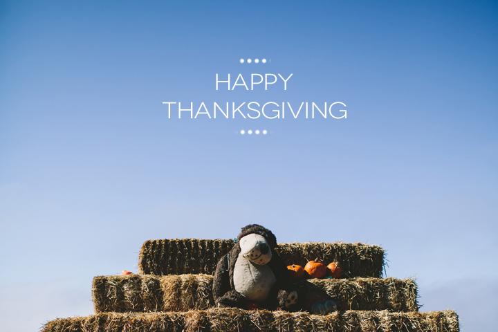 thanksgiving-pumpkin-patch