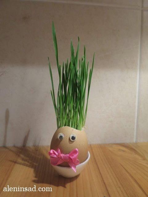 выращивание травы, травянчики, эколюдики, экоживчики, флорики, своими руками, кресс-салат, ячмень, пасхальная трава, флористическая композиция, пасхальный декор, пасхальные украшения