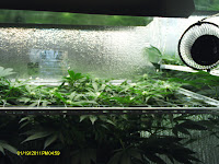 CFL-GROWLIGHT.COM