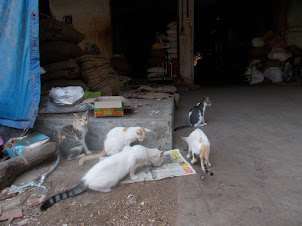Cats as guards against rats at India's largest spice warehouse in Mattancherry.