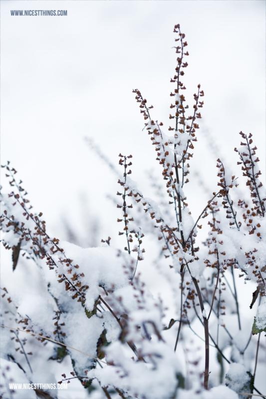 Zweige im Schnee Makro