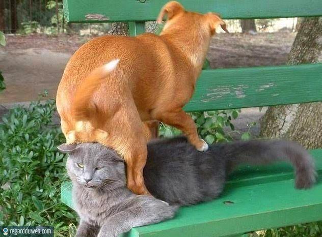 """Résultat de recherche d'images pour """"humour chien boue"""""""