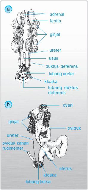 Proses perkembangbiakan pada Katak, Ikan, Reptil, Aves dan Mamalia