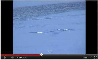 加拿大水怪 肯納根湖