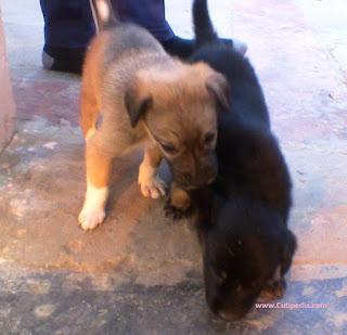 Cute Tag Team of Doggies
