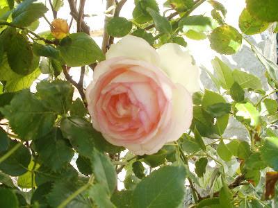 Le Jardin De Marie En Charentemaritime Aout 2012